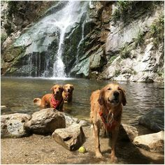 Dogs Outdoors | Lots n lots of water. What more could you ask for?!