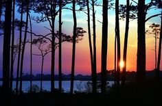 trees in silhouette at sunset