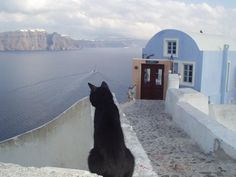 My cat Kesköö on holiday at Santorini Animals Of The World, Animals And Pets, Cute Animals, Different Breeds Of Cats, Cute Cats, Funny Cats, Curious Cat, Dog Store, Feral Cats