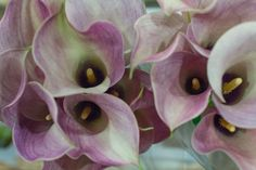 Captain Romance Calla Lilies at New Covent Garden Flower Market January 2017 New Covent Garden Market, Flower Market, Calla Lily, Love Flowers, Marketing, Lilies, Floral, Plants, January