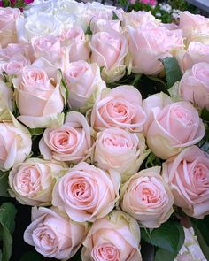 💞🌹💞Good morning🌹💞🌹I love Roses🌹💞🌹have a nice week my dear friends💞🌹💞 . Romantic Roses, Beautiful Roses, Flowers Nature, Pretty Flowers, Rose Wallpaper, Floral Photography, Love Rose, Purple Roses, Flower Making