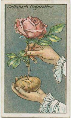 L'astuce d'autrefois qui marche encore aujourd'hui pour préparer une fleur pour un voyage.