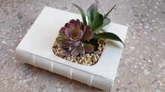 A cool concrete book planter, it's so cute!!  Found it on etsy. (Artistry in Aggregate is the little shop)