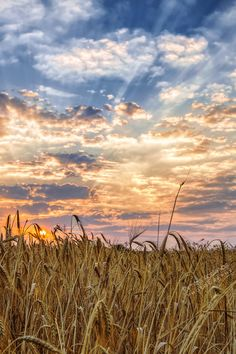 Lugnasad:  At #Lugnasad ~ Photograph harvest at  sunrise, by Dimitris Koskinas on 500px.
