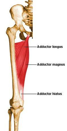 Sit Bone Pain... Not Always Hamstrings - Yoga Anatomy Good article!