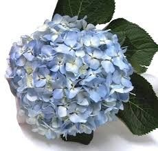 Pink And Blue Flowers, Cabbage, Vegetables, Plants, Cabbages, Vegetable Recipes, Plant, Brussels Sprouts, Veggies