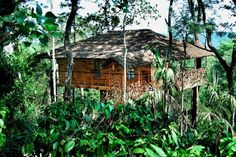 Where to Stay High Up in the Jungle in a Tree House in India: Tranquil Resort, Kolagappara, Kerala-This tree house hotel is located in the midst of a coffee plantation (& if I recall correctly, also a vanilla plantation! ) How delicious their coffee & chai must be! Makes me wish I was fit for travel!
