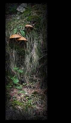Setas Parque Nacional de Aigüestortes.Estany De Sant Maurici