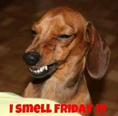 :) #Friday #Dog #Humor
