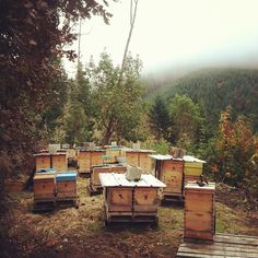 Apiary at our place