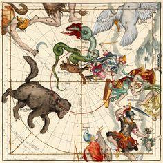 Two Bears (Ursa Major (Big bear), Ursa Minor (small bear),twisting Snake (Draco) and Hercules slaying hydra