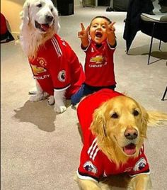 Man Utd star copies Alexis Sanchez by dressing his dog in full kit Marcus Rashford, Football Kits, Manchester United, New Trends, Your Dog, Have Fun, Dressing, Dogs, Animals