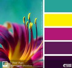 Summer colour palette, purple color combinations, bright color schemes, p. Colour Pallette, Color Palate, Colour Schemes, Color Combos, Color Patterns, Bright Color Palettes, Design Seeds, Colour Board, Color Stories