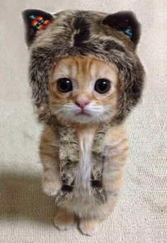 Visit us @ http://www.pet-world.auk2.com/c/cute-cats-10 . Poor kitty, made to dress up.