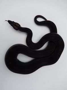 Schwarze Schlange - Schwarze Schlange – – - You are in the right place about home care design Here we offer you the most beautiful pictures Reptiles And Amphibians, Les Reptiles, Cute Reptiles, You Are My Moon, Cute Snake, Slytherin Aesthetic, Hades Aesthetic, Draco Malfoy Aesthetic, Crown Aesthetic