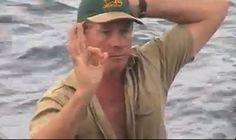 Steve Irwin Death Footage | steve irwin, crocodile hunter, dead, died, death, stingray, video ...