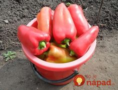 Hydroponics, Gardening Tips, Pergola, Stuffed Peppers, Vegetables, Health, Food, Panda, Garden Ideas
