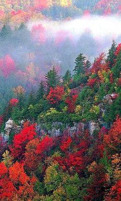 Autumn - Blackwater Canyon, West Virginia