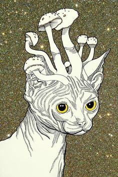 Hairless cat + mushrooms + glitter. Tell me what you think!