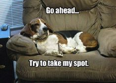 basset hound spot meme