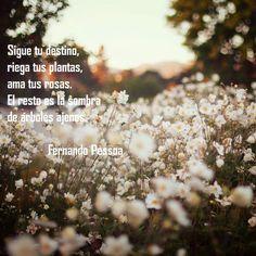 """Cuida tu propio jardín, propone Fernando Pessoa en este bello texto que compartió Adriana Marani en Facebook… """"el resto es la sombra de árboles ajenos"""". ¿Cuántas veces ponemos en…"""