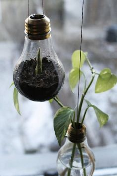 Upcycling light bulbs into planters