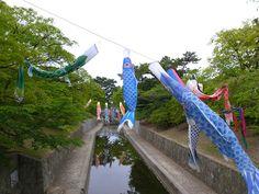Koi-Nobori. Photograph by @Yasuyoshi Kobayashi