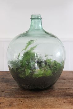 How to plant up a closed carboy bottle terrarium Terrarium Closed, Bottle Terrarium, Bottle Garden, Terrarium Diy, Bottle Plant, Plant In Glass, Plants In Bottles, How To Make Terrariums, Message In A Bottle