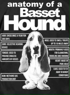 Anatomy of a Basset Hound Hound Puppies, Hound Dog, Basset Hound Funny, Basset Dog, Curly Coated Retriever, Black Russian Terrier, Clumber Spaniel, Bluetick Coonhound, Bearded Collie