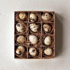 Dozen Quail Eggs in Gifts Spring Favorites at Terrain