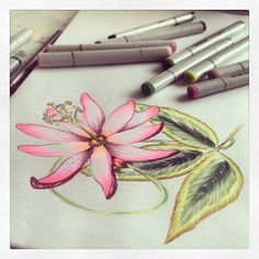 Flower illustration with Copics by @marinabarbato
