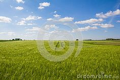 #Beautiful #Landscape #Green #Corn #Field With #Blue #Cloudy #Sky @dreamstime #dreamstime #landscape #nature #burgenland #austria #rtavel #holidays #season #summer #spring #agriculture #bluesky #outdoor #stock #photo #portfolio #download #hires #royaltyfree