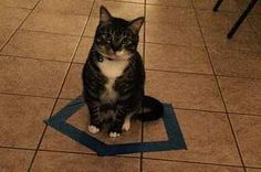 The 31 Most Cat Things To Ever Happen