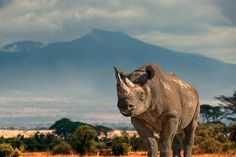 Ol Rhino, Near Newcastle, South Africa #Travel-ParadiseDivineAfrica