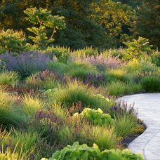 1000 images about ornamental grasses on pinterest for Landscape design using ornamental grasses
