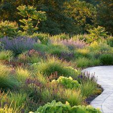 1000 images about ornamental grasses on pinterest for Landscape design using ornamental grasses