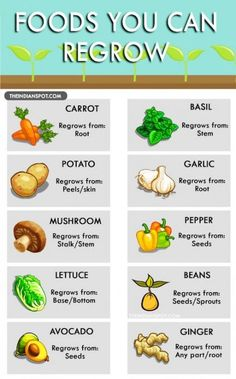 How to grow vegetables from scraps plants 53 Trendy Ideas H. - How to grow vegetables from scraps plants 53 Trendy Ideas How to grow vegetabl - Growing Veggies, Growing Plants, Growing Tomatoes, Growing Herbs Indoors, Starting Seeds Indoors, Green Onions Growing, How Plants Grow, Growing Bell Peppers, Growing Carrots