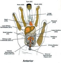 Korean Reflexology: 'Koryo hand therapy'!