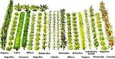 ABH - Associação Brasileira de Horticultura - Planejando e Executando sua Horta