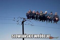 JBZD.pl - najgorsze obrazki w internecie! Utility Pole, Concert, Movies, Movie Posters, Film Poster, Films, Popcorn Posters, Film Books, Concerts