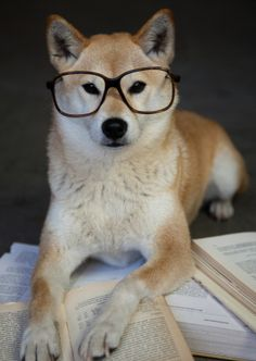 Even your dog thinks your dissertation should be done by now.