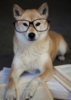 My dog Foxy is a very smart dog ;) #shiba inu