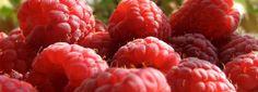 Cetona de frambuesa como suplemento para dietas
