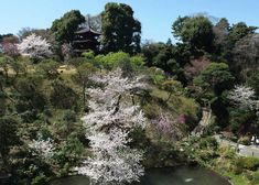 21 Free Things to Do in Tokyo from : Gardens at Hotel Chinzanso, Tokyo Tropical Greenhouses, Temple Gardens, Cherry Blossom Season, Small Waterfall, Cruise Outfits, Tokyo Travel, Bath And Beyond Coupon, Spring Nature, Blossom Trees