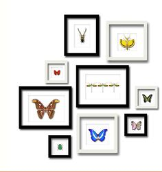 butterfly framed - Google zoeken
