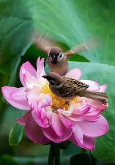 I love nature and all it's beauty ,and all of the creatures that we have here on this earth. Most Beautiful Birds, Pretty Birds, Love Birds, Animals Beautiful, Lotus Symbol, Animals And Pets, Cute Animals, Berry Plants, Photo Animaliere