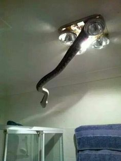O.O If I'm showering and I see that... I'm not entirely sure what I would do.