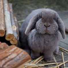 Well hello Bunny