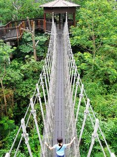 Singapore : Tree top walk!  You can read all about it HERE: http://www.metropolasia.com/Central_and_North_Singapore/Tree-Top-Walk
