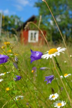 Country Living - tiny red building in a meadow of wildflowers. Country Farm, Country Life, Country Living, Beautiful Flowers, Beautiful Places, Beautiful Pictures, Magic Flower, Farms Living, Old Barns